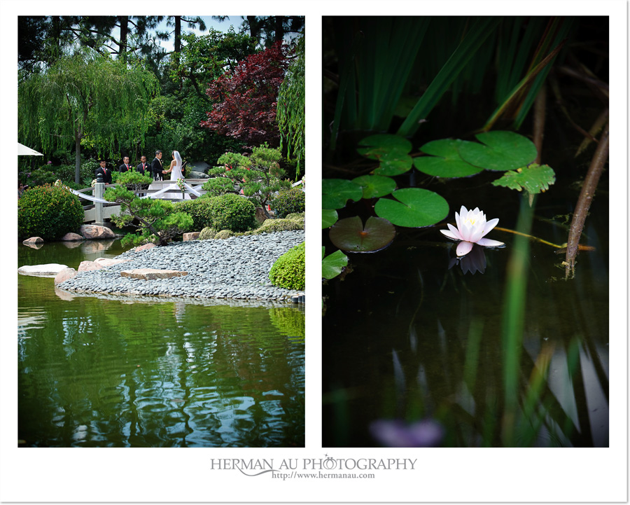 Wedding: Mike & Tiffany @ Earl Burns Miller Japanese Garden at CSULB ...