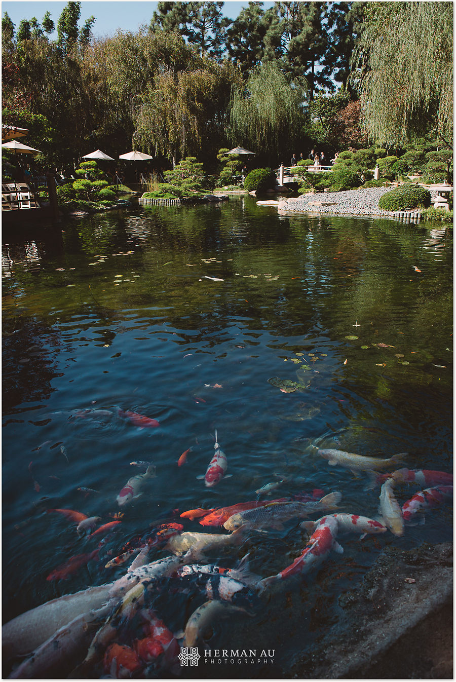 Wedding muoy dave csu long beach japanese garden for Japanese garden with koi pond
