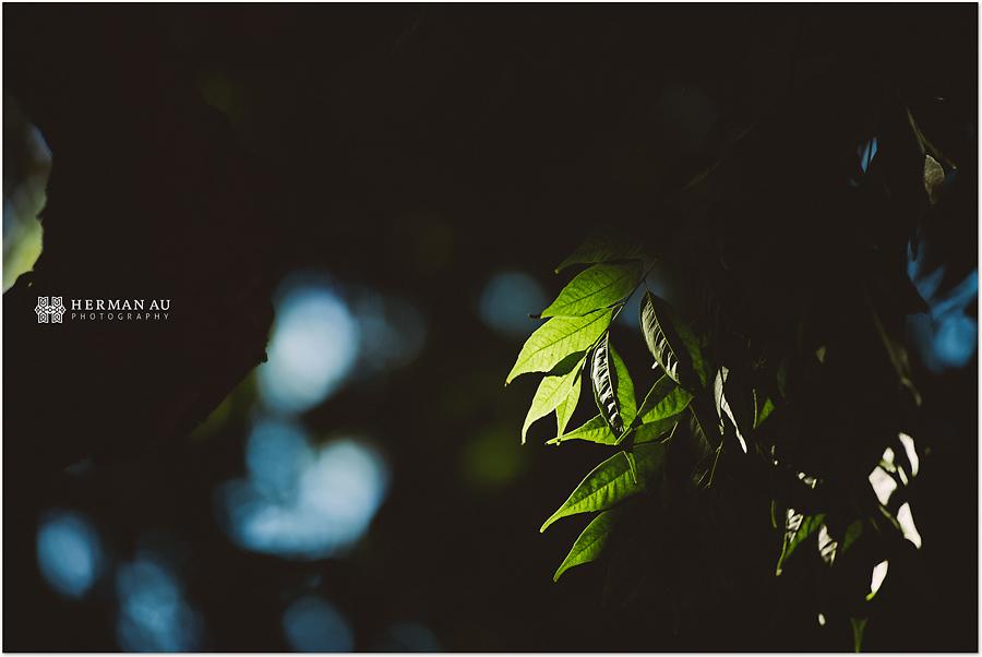 Muoy & Dave wedding japanese garden foliage